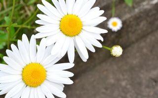 Фото бесплатно зеленый цвет, ромашки, белые