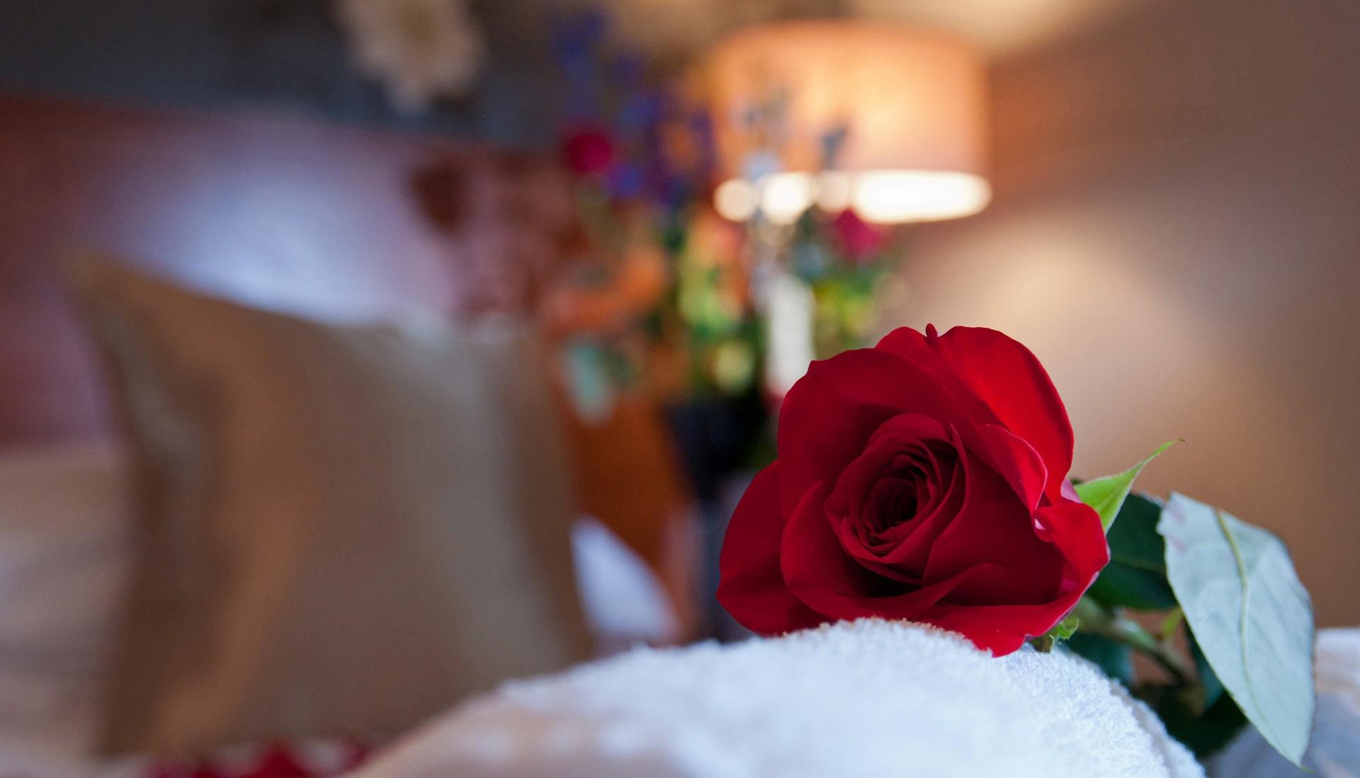 Как извиниться перед девушкой цветами Все цветы 3