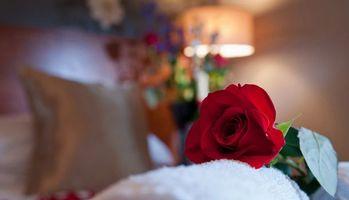 Бесплатные фото роза,лепестки,аромат,листья,шипы,иголки,полотенце