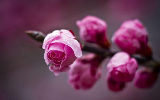 Фото бесплатно цветы, лепестки, шипы