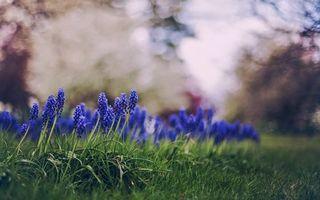 Фото бесплатно цветки, бутоны, стебли