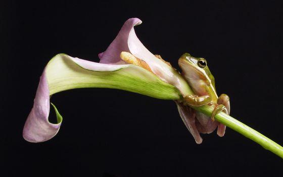 Фото бесплатно цветок, пыльца, лапы, глаза, лепесток, животные, цветы