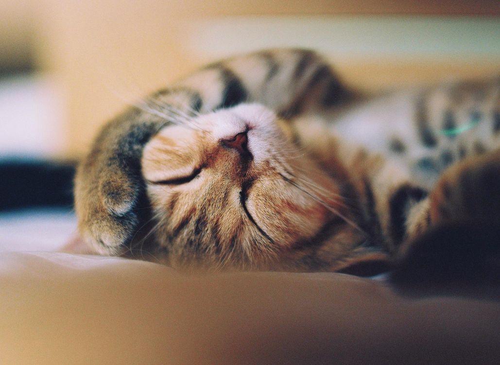 Фото бесплатно усы, кот, кошка, морда, котэ, лапа, животные, кошки, кошки