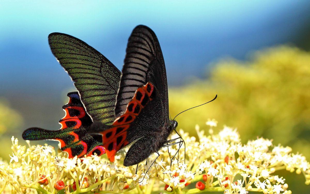 Фото бесплатно бабочка, трава, цветы - на рабочий стол
