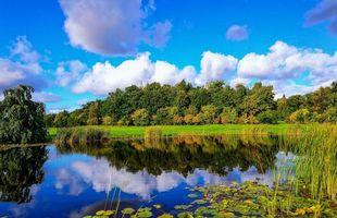Бесплатные фото деревья,лес,листья,кусты,небо,облака,река
