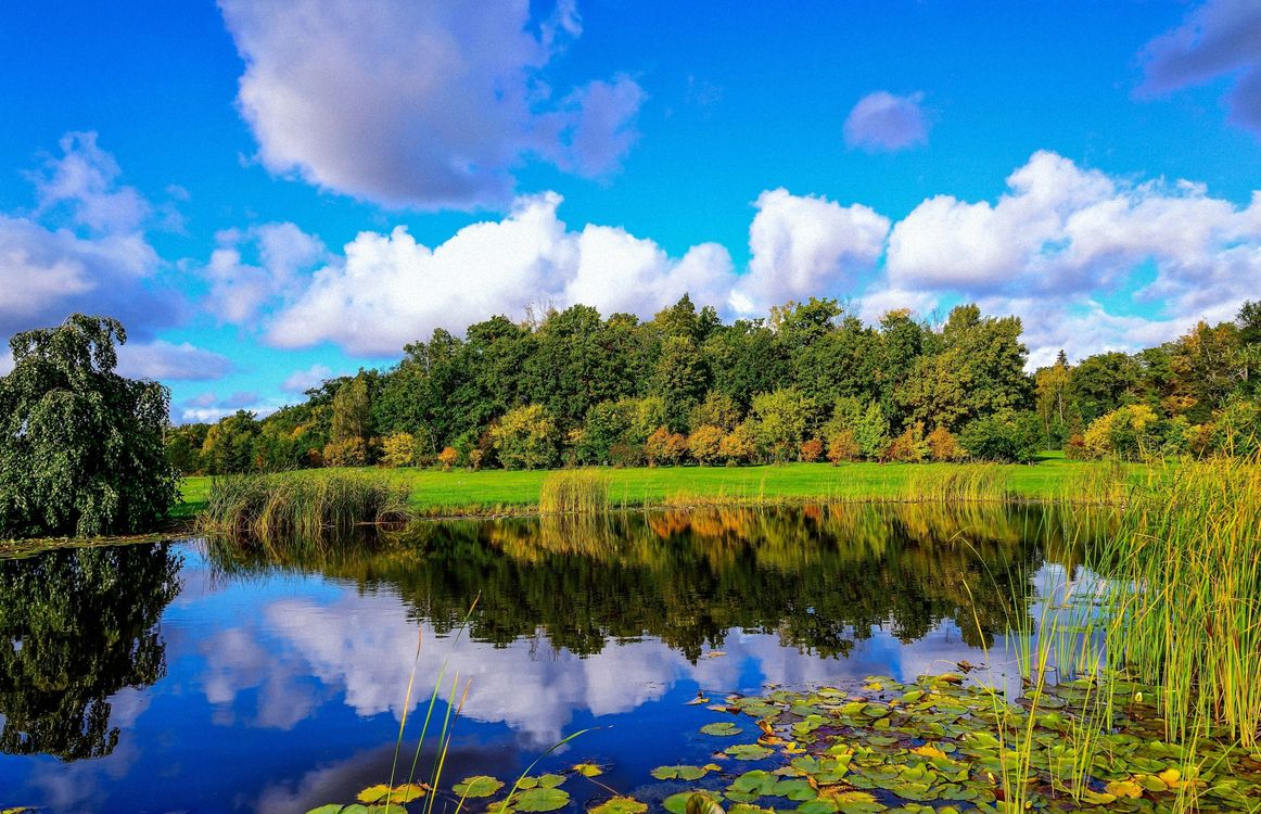 Фото бесплатно деревья, лес, листья, кусты, небо, облака, река, отражение, трава, камыши, пейзажи, пейзажи