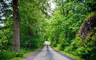 Заставки дорога,асфальт,лес,деревья,зелень,лето,скала