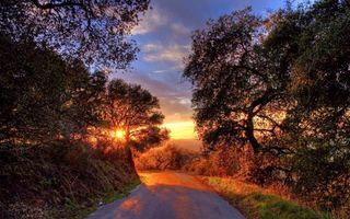 Бесплатные фото дорога,деревья,солнце,пейзажи