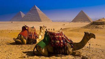 Бесплатные фото египет,пирамиды,песок,верблюды,седла,люди,разное
