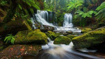 Бесплатные фото Horseshoe Falls,Tasmania,лес,деревья,камни,водопад,речка