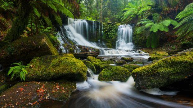 Заставки Horseshoe Falls, Tasmania, лес