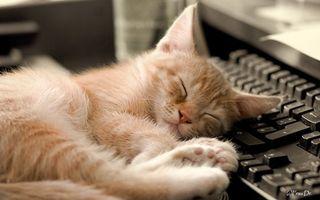 Бесплатные фото кот,котенок,маленький,пушистый,уши,глаза,лапки
