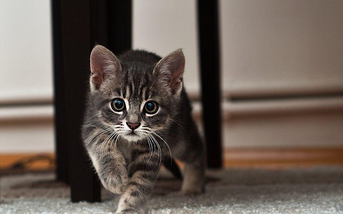 Фото бесплатно мордочка, котенок, глаза - на рабочий стол