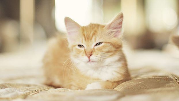 Заставки котенок, рыжий, дремлет