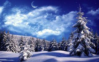 Фото бесплатно зимний лес, елки, снег