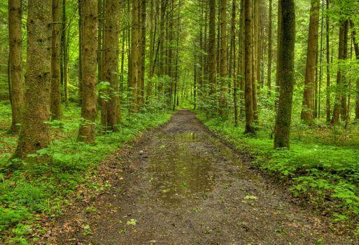 Фото бесплатно лес, дорога, лужи