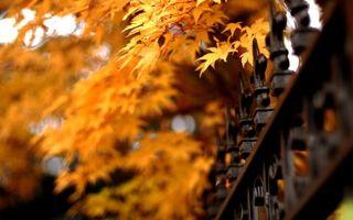 Бесплатные фото листья,деревья,парк,осень,забор,кованый,металлический
