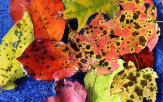 Фото бесплатно листья, осень, оранжевый, зеленый, красный, пятна, дыры, природа