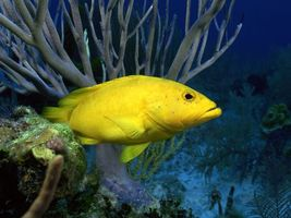 Фото бесплатно рыбы, кораллы, желтый