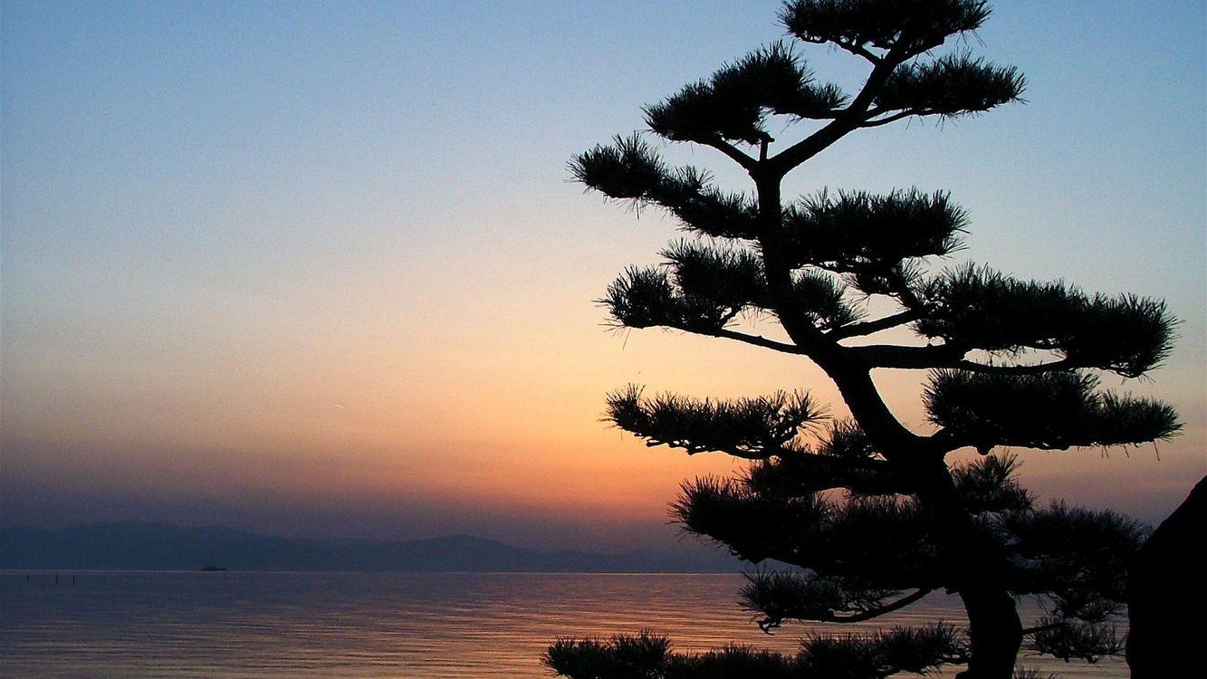 Фото бесплатно пейзажи, дерево, вода - на рабочий стол