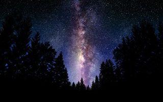 Заставки ночь, деревья, небо