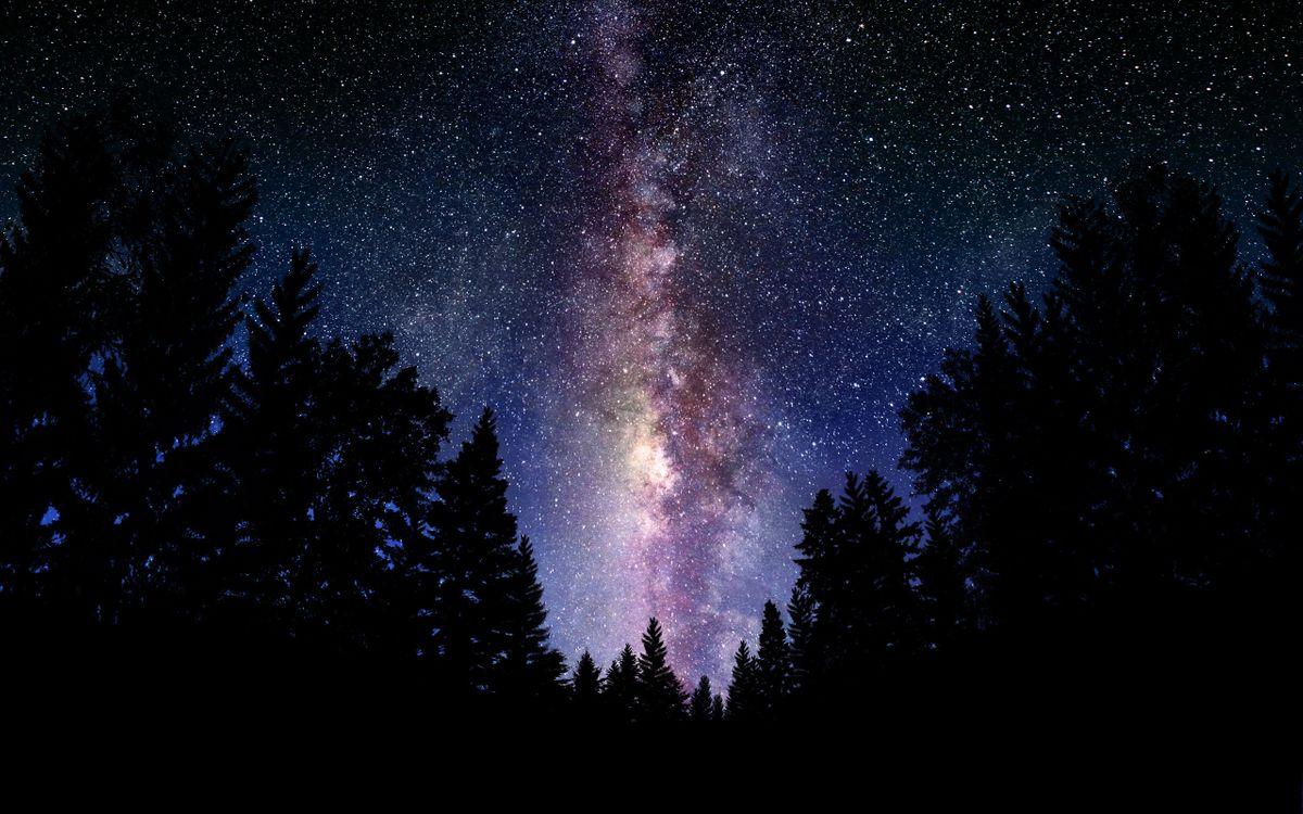 Обои ночь, деревья, небо картинки на телефон