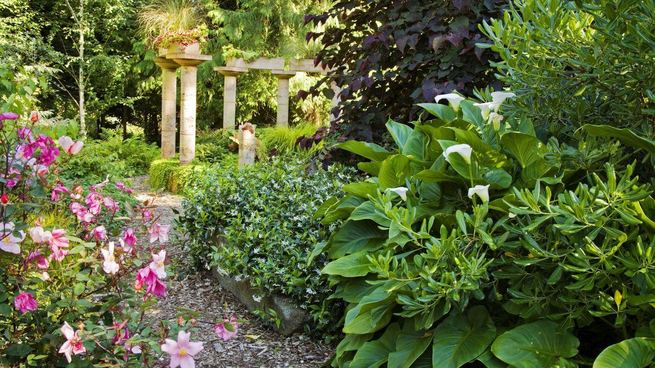 Фото бесплатно парк, сад, тропинка - на рабочий стол