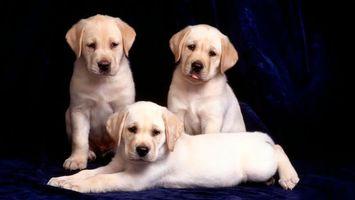Фото бесплатно пес, щенок, маленькие