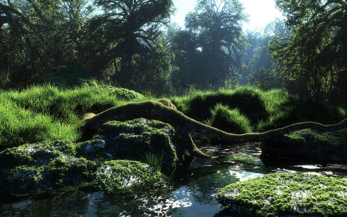 Фото бесплатно трава, пруд, дерево, деревья, листья, ветки, лес, камни, небо, вода, волны, природа, природа