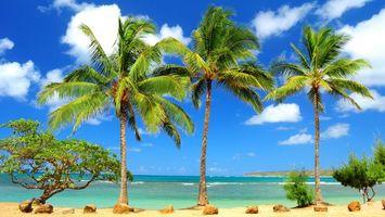 Фото бесплатно пальмы, пейзажи, пляж
