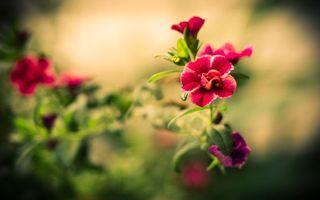 Фото бесплатно цветок, листья, лепестки