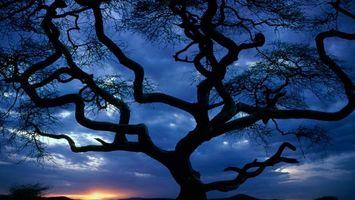 Бесплатные фото вечер,закат,солнце,дерево,ветви,небо,природа