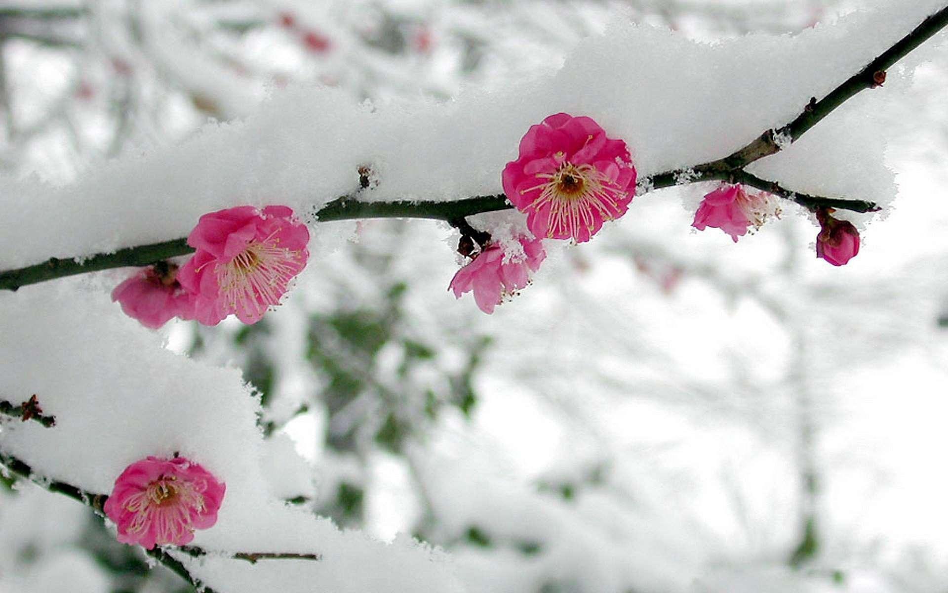 диснеевском мультфильме картинки на телефон зима весна нужно восстановить шифр