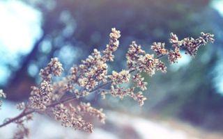 Фото бесплатно ветка, дерево, весна