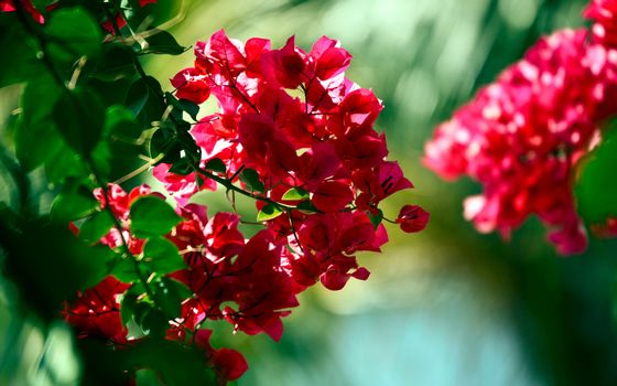 Photo free petals, red, branches