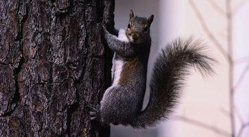 Бесплатные фото белка,морда,глаза,лапы,хвост,дерево,животные