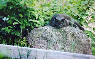 Фото бесплатно черный, кот, камень, трава, кустарник, отдых, ситуации