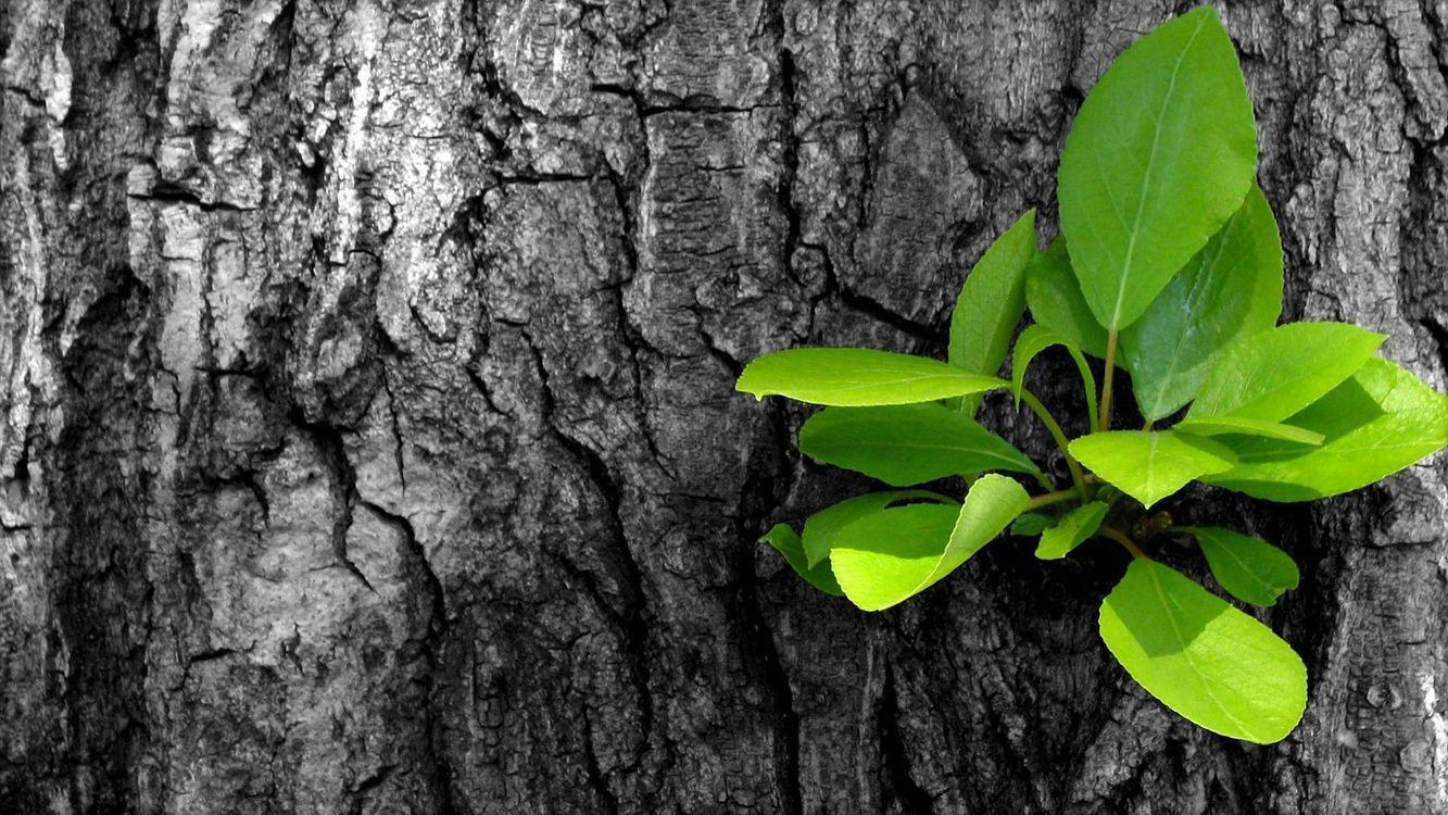 Фото бесплатно дерево, ствол, кора, сучок, листья, зеленые, природа, природа