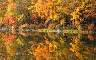Бесплатные фото деревья,лес,листопад,листья,озеро,река,отражение