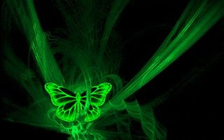 Обои фон, черный, бабочка, линии, полоски, крылья, узор, насекомые