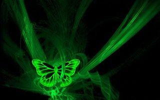 Фото бесплатно фон, черный, бабочка, линии, полоски, крылья, узор, насекомые
