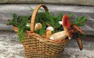 Бесплатные фото корзина,елка,ветка,грибы,плоды,подосиновики,сыроежки