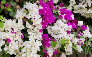 Бесплатные фото лепестки,белые,розовые,листья,зеленые,цветы