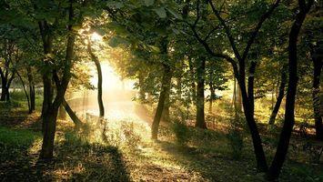 Бесплатные фото лес,деревья,свет,лучи,трава,необычно,природа