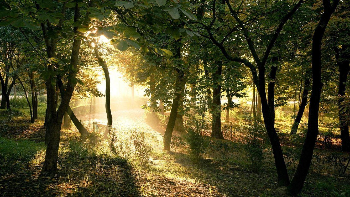 Фото бесплатно лес, деревья, свет, лучи, трава, необычно, природа, природа - скачать на рабочий стол