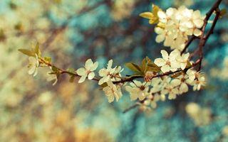 Фото бесплатно липа, дерево, цветы, ветка, листья, лепесток, природа