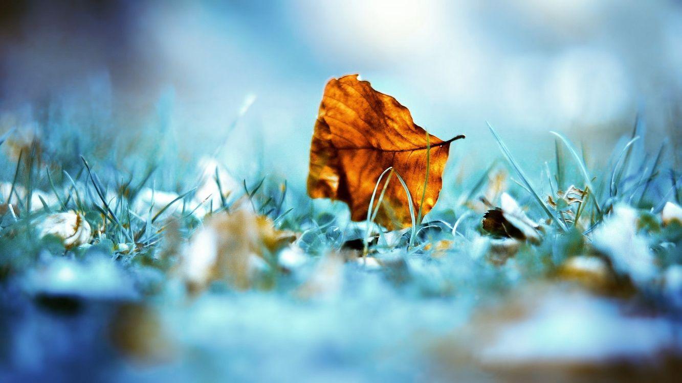 Фото бесплатно листок, листик, осень, трава, синий, фон, иней, холод, размытость, фото, желтый, опавший, макро, природа, природа