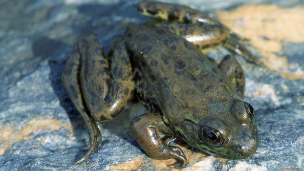 Бесплатные фото лягушка,лапы,глаза,сидит,темная,камень,животные