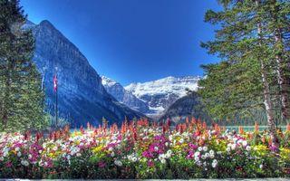 Бесплатные фото небо, облака, горы, цветы, трава, зелень, природа