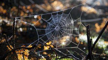 Фото бесплатно паутина, узор, ловушка, ветки, листья, трава, природа
